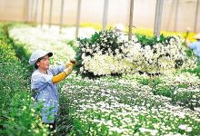 Smart agriculture to be aided by PPP